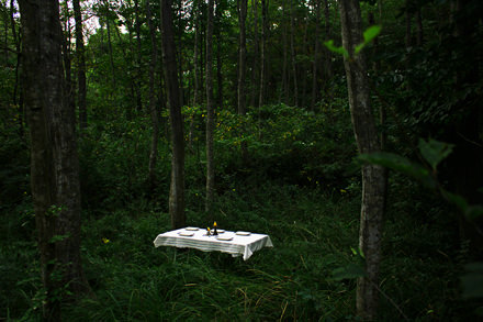 五感で森を感じるツアー「森の晩餐 -狩猟・採集を巡る旅」