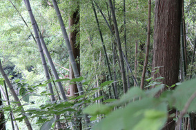 8月2日〜3日、新潟・山ノ家で旧暦七夕を楽しむイベントが開催されます!