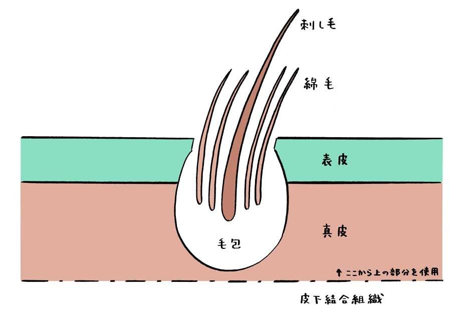 毛皮を知ること[中編]<br>毛皮の基礎知識と日本毛皮協会の取り組み