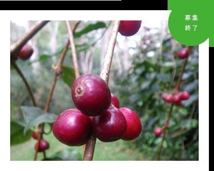 大地を守る会×ATJ×エココロ「フェアトレードコーヒー講座」